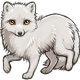 Summer the Arctic Fox